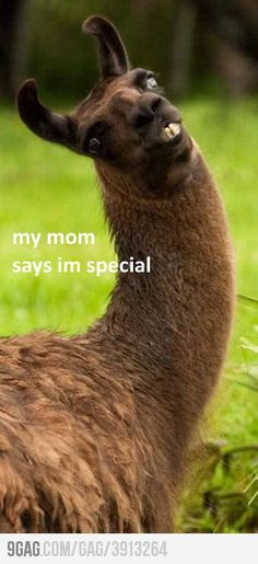 My mom tells me this ALL the time! Funny Llama Pictures, Funny Pictures Can't Stop Laughing, Funny Pics With Captions, Funny Animal Faces, Funny Profile Pictures, Smile Captions, Pictures Of Llamas, Profile Pics, Cute Funny Animals