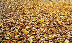 "Check out my art piece ""Autumn Carpet"" on crated.com #art #photography #fall #autumn"