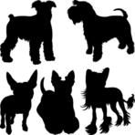 Vector set of silhouettes of dogs schnauzer, terrier, Scottish Terrier, Bull Terrier, Chinese Crested breed in the rack