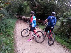 Riding with the sheeps