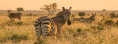 Zebra and eland in the sun's glow [OC] 2048 x 1200 Kenya