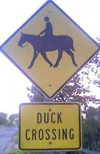 Duck?!