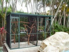 inside a bird aviary how to and important info parrot in outdoor aviary pinterest. Black Bedroom Furniture Sets. Home Design Ideas