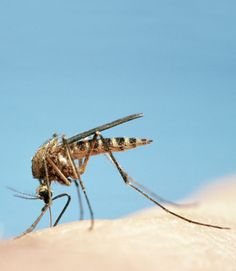 Off-the-Shelf and Homemade Natural Insect Repellents - GoodHousekeeping.com