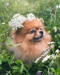 @makarpavlin - Победитель прошлой выставки собак Наша страничка Вконтакте…                                                                                                                                                                                 More