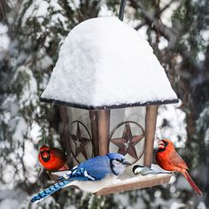 Winter Bird Feeding: Bringin' in the Birds - Nature and Environment - MOTHER EARTH NEWS..Click for info.