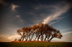 Photo of group of trees, landscape photography print, colorful landscape…
