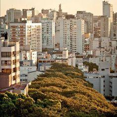 Porto Alegre - Rio Grande do Sul (by @Misty Curia)