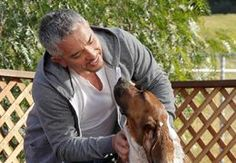 12 things you need to know about spay/neuter   Cesar's Way