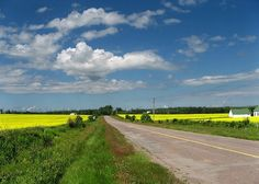 Fields in flower along the back roads - cycling in PEI