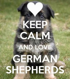I do love German Shepherds - one of the first dogs I had.