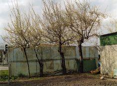 Pflaumenbäume vor Wellplastik, Villetaneuse (2006)