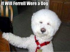 if Will Ferrell were a dog..