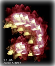 Mystery Lights by Maureen McDonald