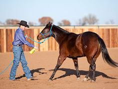 Downunder Horsemanship | Training Tip of the Week: Avoid taking a scary object away when the horse is moving his feet