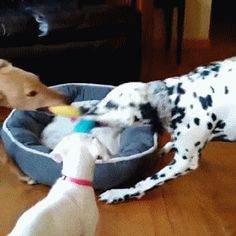 Other Funny Gifs http://gif-tv.tumblr.com/ And Funny Youtube Video - https://www.youtube.com/watch?v=HSY2sUPqFkg