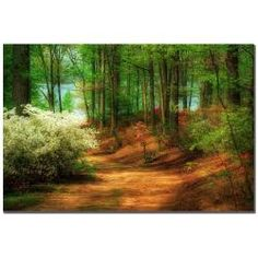 @Overstock - Bring the beauty of the great outdoors inside with this stunning print by Lois Bryan. Featuring lush greens, deep browns, and warm light, this gallery-wrapped canvas art titled Favorite Path will update your space with a contemporary style.http://www.overstock.com/Home-Garden/Lois-Bryan-Favorite-Path-Canvas-Art/5639020/product.html?CID=214117 $41.99