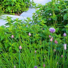 Nordic garden design, by Green Idea