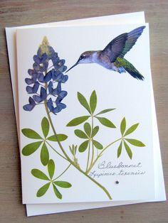 Bluebonnet wildflower with hummingbird