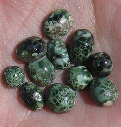 Chlorastrolite (Michigan Greenstone)