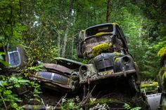 Today, rusting classic cars including vintage Opels, Fords, Volvos, Buicks, Audis, Saabs and a Sunbeam litter the natural undergrowth. | 15 Eerie Pictures Of A Classic Car Graveyard In Sweden