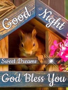 Good night n sweet dreams Good Night Meme, Good Night Love Quotes, Good Night My Friend, Good Night Messages, Good Night Thoughts, Lovely Good Night, Good Night Sweet Dreams, Good Morning Good Night, Morning Light
