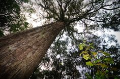 This article covers the Knysna-Amatole Montaine Forest ecoregion, its biodiversity, status and threats, as well as the harvesting of our trees. Alien Plants, Pan Africanism, Knysna, State Forest, Biomes, Natural Resources, Outdoor Recreation, Nature Reserve, Archipelago