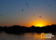 Descubra o Pantanal em Brasil Secreto.  Brasil Secreto, Pantanal. #NatGeo Confira conteúdo exclusivo no www.foxplay.com