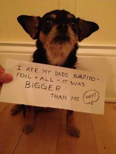 I Ate My Dad's Burrito