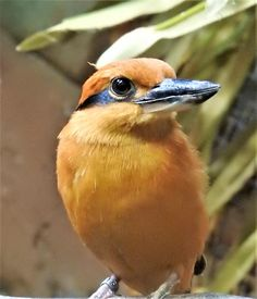 Rate This Amazing Photo That Lisa Martin Entered In The Common Kingfisher Do