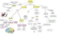 MAPPE per la SCUOLA: SCIENZE - Il corpo umano
