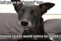 best.captioned.dog.photo.ever