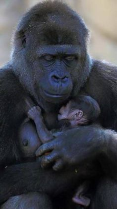 A mother's love Primates, Mammals, Cute Baby Animals, Animals And Pets, Funny Animals, Wild Animals, Beautiful Creatures, Animals Beautiful, Cutest Animals