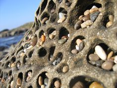 Pebbles in Tafoni at Pebble Beach, San Mateo County, California. Rocks And Gems, Rocks And Minerals, Art Rupestre, Beautiful Rocks, Pebble Beach, Pebble Art, Land Art, Stone Art, Natural Wonders