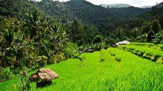 Randonnée à Munduk - Loin des sentiers battus, Munduk est un bourg typique perché à 1 000 m d'altitude au cœur de collines couvertes de forêts tropicales et de rizières. Depuis le centre du village, un chemin de randonnée conduit jusqu'à la cascade Laagan, la plus haute de Bali.