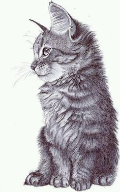 .Kitten drawing - detailed