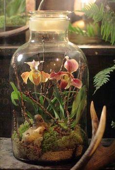 terrario em vaso com orquidea