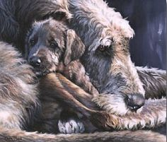 Dogs in Art at the StockBridge Gallery - Irish Eyes a limited edition print by Pippa Thew, �120.00 (http://www.dogsinart.com/irish-eyes-a-limited-edition-print-by-pippa-thew/)