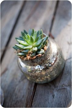 How to grow succulents in a jar.