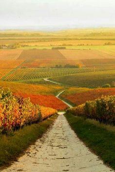 Autumn vineyard in Hungary