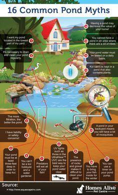 16 Common Pond Myths (infographic) - My Backyard Now Outdoor Ponds, Ponds Backyard, Garden Ponds, Pond Landscaping, Backyard Waterfalls, Outdoor Fountains, Diy Pond, Koi Fish Pond, Koi Ponds