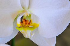 """""""Orchid Smile""""  Click the """"pinned from"""" link to purchase this print."""
