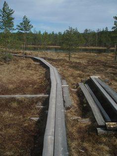 Hatlamminsuon pitkospuut, Riihimäki.