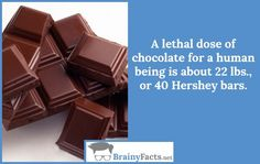 Chocolate Facts : Lethal dose | did you know