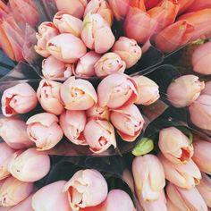 #Fleurs #Flowers