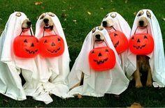 Five Halloween dogs