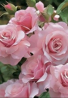 28 Best Perennials for a Cutting Flower Garden Queen Of Sweden English Rose My Flower, Pretty Flowers, Flower Power, Pink Flowers, Flower Beds, Rose Winter, Birthday Wishes, Happy Birthday, Birthday Quotes