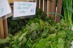 Speckly lettuce from PrariErth Farm in Atlanta, IL