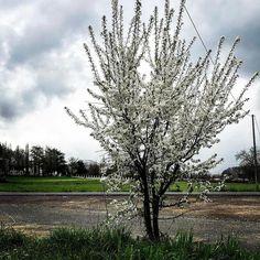 #spring #rain #sky #clouds #tree