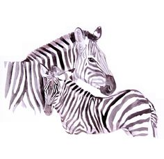 Zebra Original Watercolor Painting 13x19 fine art wild animal illustration wall art home decor realistic artwork. via Etsy.